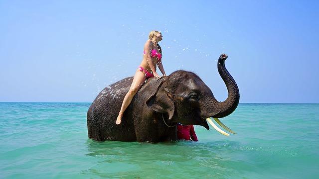 Maudynės su drambliais